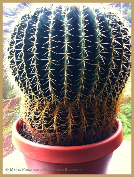 Pachamama/ Cactus Collection