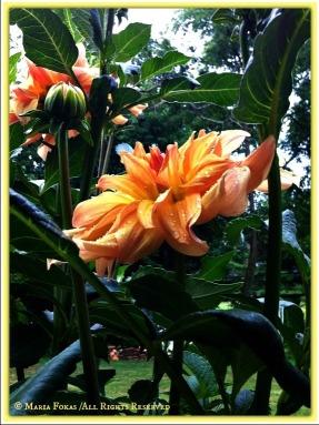 Flowers in the Rain 3
