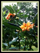 Flowers in the Rain 4