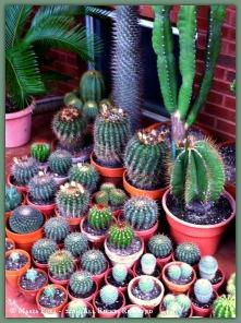 Pachamama? Cactus Cactus