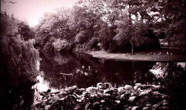 free verse poetry – Luve-Knots