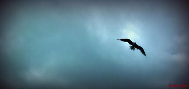 mariafokas bird 2